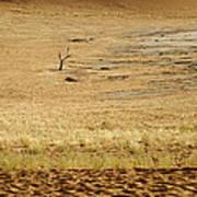 Namibian Desert Scene 1 Art Print