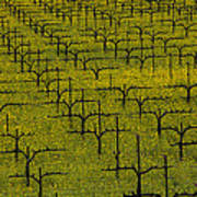 Napa Mustard Grass Print by Garry Gay