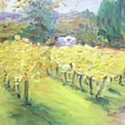 Napa Vineyard Art Print by Barbara Anna Knauf