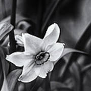 Narcissus In The Shadows Art Print