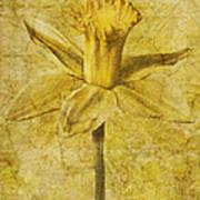 Narcissus Pseudonarcissus Art Print
