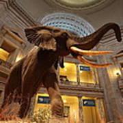 National Museum Of Natural History Art Print