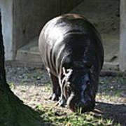 National Zoo - Hippopotamus - 12121 Art Print