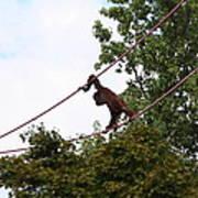 National Zoo - Orangutan - 01135 Art Print