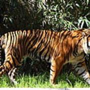 National Zoo - Tiger - 01138 Art Print