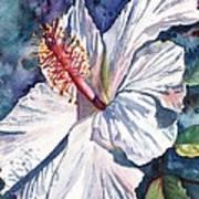 Native Hawaiian Hibiscus Art Print