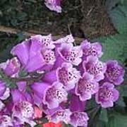 Natural Bouquet Bunch Of Spiritul Purple Flowers Art Print