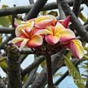 Natural Bouquet  Art Print