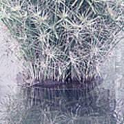 Natural Reflections Art Print