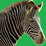 Natural Zebra Art Print