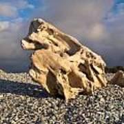 Naturally Sculpted Waterworn Wood On Pebble Beach Art Print