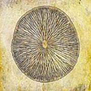 Nature Abstract 1 Art Print