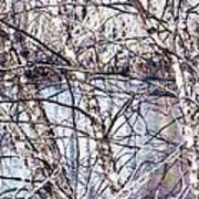 Nature And Texture Art Print