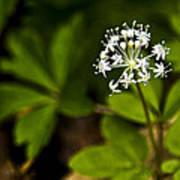 Nature Celebrates Spring With A Burst Of Botanical Fireworks Art Print