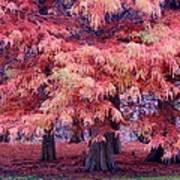 Nature Colors Art Print