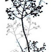 Nature Design Black And White Art Print