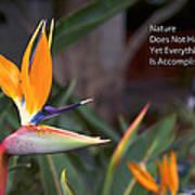 Nature Does Not Hurry Bird Of Paradise Art Print
