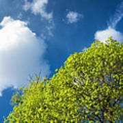 Nature In Spring - Bright Green Tree And Blue Sky Art Print