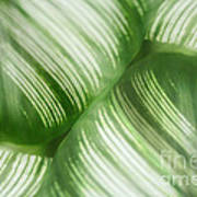 Nature Leaves Abstract In Green 2 Art Print