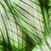 Nature Leaves Abstract In Green Art Print
