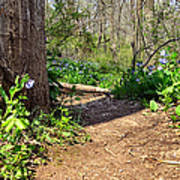 Nature Path Art Print
