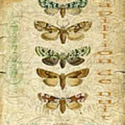 Nature Study-no.3 Art Print