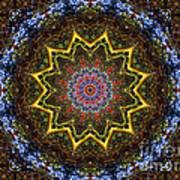 Naturel Star Art Print