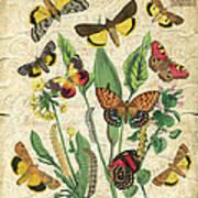 Natures Beauty-no.1 Art Print