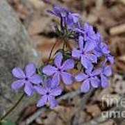 Nature's Bouquet Art Print