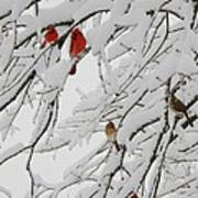 Nature's Christmas Ornaments Art Print