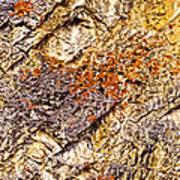 Natures Gold Art Print