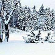 Natures Handywork - Snow Storm - Snow - Trees 2 Art Print