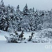 Natures Handywork - Snowstorm - Snow - Trees Art Print