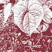 Nature's Heart 2 Art Print