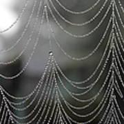 Nature's Pearls Art Print
