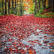 Nature's Red Carpet Art Print