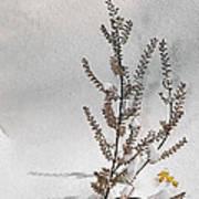Natures Snow Coat Art Print