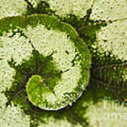 Natures Spiral Art Print