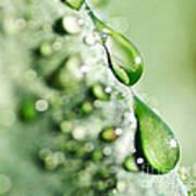 Nature's Teardrops Art Print