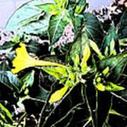 Nature's Trumpet Art Print