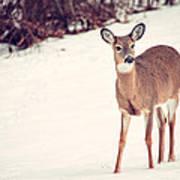 Natures Winter Visit Art Print