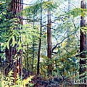 Navarro River Redwoods Art Print