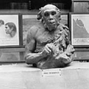 Neanderthal Museum Display, 1924 Art Print