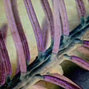 Needled 9 Art Print