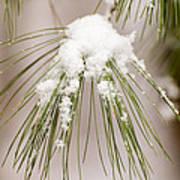 Needles In The Snow Art Print