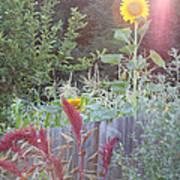 Neighboring Gardeners Art Print