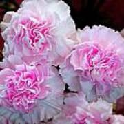 Neon Carnations Art Print