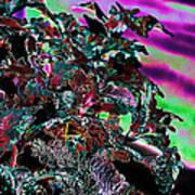 Neon Coleus Art Print