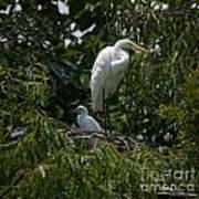 Nest Lookout Art Print