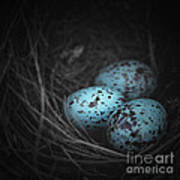 Nest Of 3  Art Print